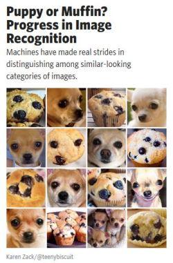 PuppyMuffin